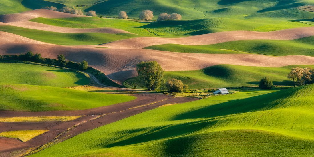 From Steptoe Butte - The Palouse, Washington