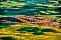 BEST OF THE PALOUSE